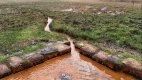 Národní přírodní rezervace Soos – rašeliniště a močály poblíž Chebu.