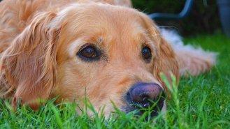 Canisterapie: Když psi uzdravují