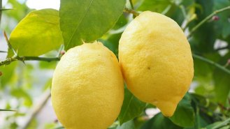 Citron: Žlutý zásobník vitaminu C