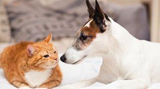 7 tipů, jak ochránit domácí mazlíčky před parazity
