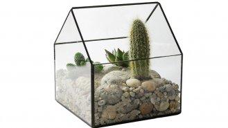 """13 kroků k vytvoření malé """"zahrádky"""" z kaktusů"""