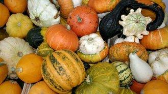 Dýně: Pro zpestření jídelníčku i pro zdraví