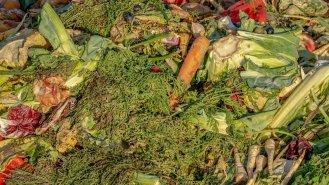 Žížaly milují kávu aneb Víte, co patří do kompostu?