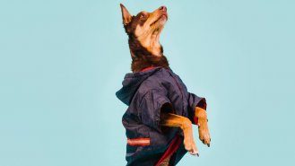 Jak posílit imunitu psa (nejen) v době koronaviru