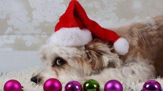 Vánoce se psem nebo pod psa?