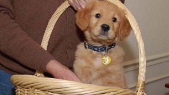 Příběh Dany (48): Lásku mi přivedl pes