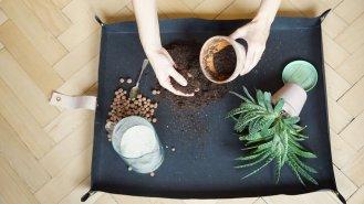 5 otázek a odpovědí k přesazování pokojových rostlin