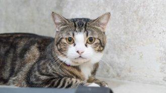 Příběh Elišky (43): Když vám kočka vybere manžela