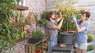 Vypěstujte si ovoce na balkóně