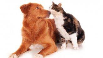 4 tipy pro bezproblémové soužití psa a kočky