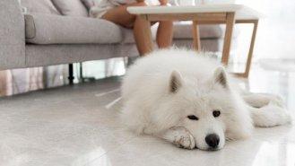 Torze žaludku ohrožuje psy