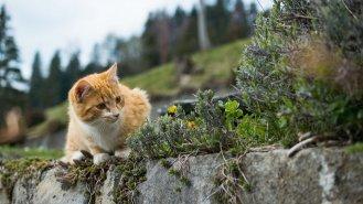 Kastrovat, či nekastrovat kočičího mazlíčka?
