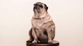 5 rad, jak u psů zatočit s kily navíc