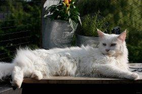 Jak pečovat o kočičího seniora?