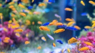 8 rad pro začínající akvaristy