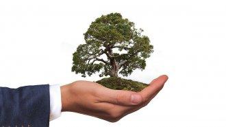 Bonsaj – strom vmisce, který nepřestává udivovat