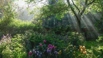 11 rad, jak připravit zahradu na jaro