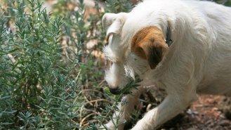 Jaké jsou vhodné bylinky pro psy?
