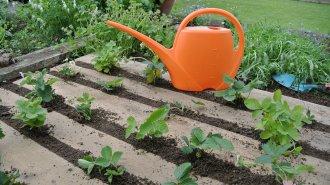 5 rad, jak vybírat a sázet rostliny