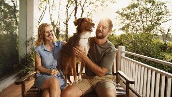 3 tipy: Prázdniny pro kočku (a pro psa)