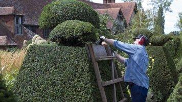 5 rad, jak správně vysadit živý plot