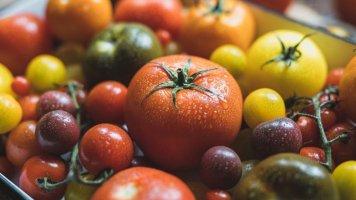 Rajčata: Nejrozšířenější zelenina na světě nepatří do lednice