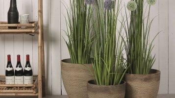 4 rady, jak v zimě hýčkat pokojové květiny
