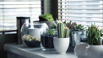 Jak pečovat o kaktusy a sukulenty