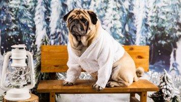 7 rad, jak pečovat o pejska v zimě