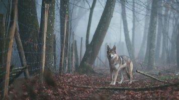 Příběh Jarky (60): Záhada tajemného místa v lese