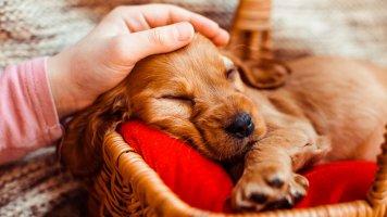 5 rad, na co se připravit před pořízením štěněte