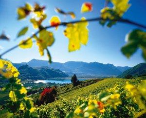 Nekonečné jihotyrolské vinobraní