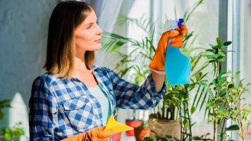 Pokojové rostliny aneb Příroda v bytě