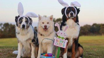 Zábavný kvíz: Letem velikonočním světem