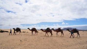 Království písečných dun