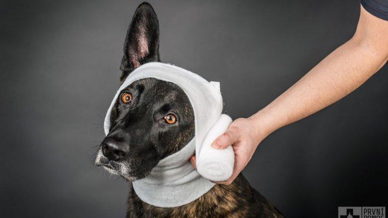 Kurz první pomoci pro psy