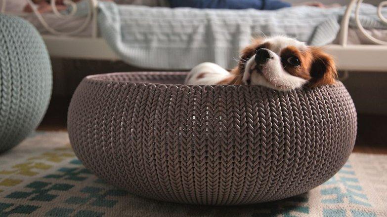 5 tipů, než si opatříte psa