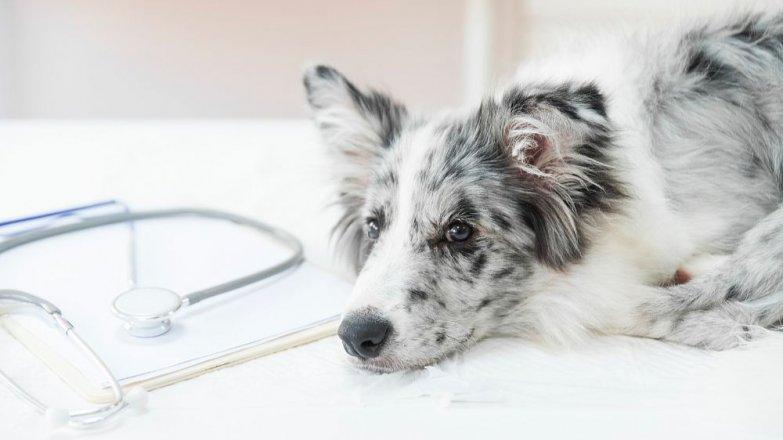 Mohou pes nebo kočka onemocnět koronavirem?