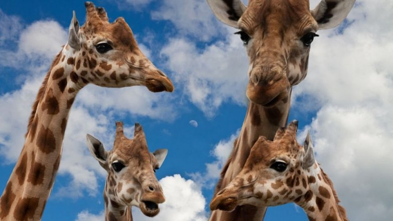 5 zoo, kam můžete vyrazit s dětmi nebo vnoučaty