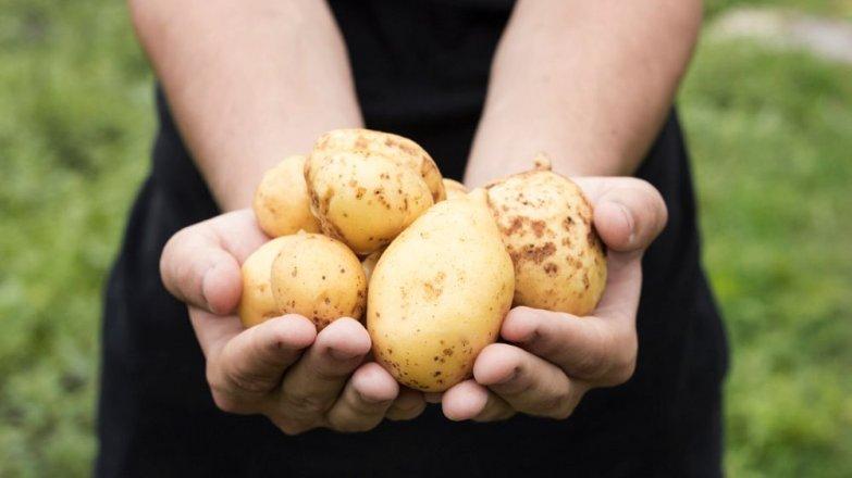 Co (ne)víte o bramborách?
