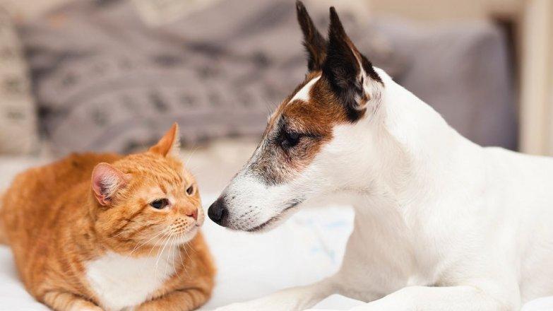 5 nejčastějších stravovacích chyb u psů a koček
