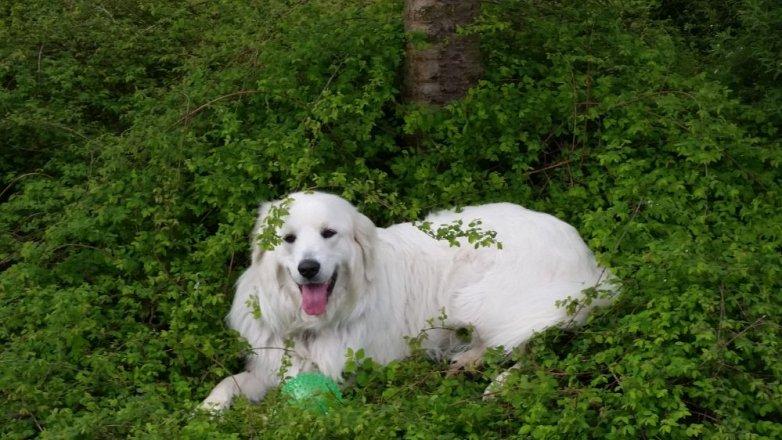 Víte, že je dnes Mezinárodní den psů?