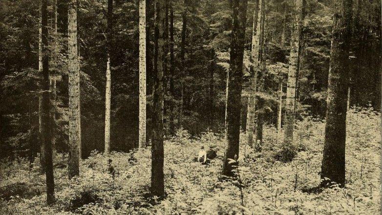 Heinrich Pommerencke: Schwarzwaldská bestie