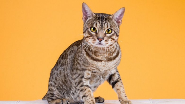 5 rad, jak správně krmit kočku