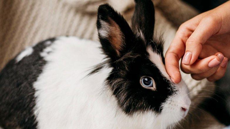 Když má láska dlouhé uši aneb Jak pečovat o králíčka?