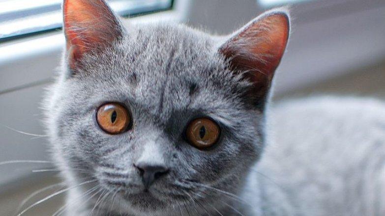 5 rad, jak správně krmit koťata
