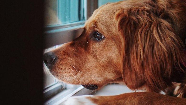 Víte, že pes nemá být sám doma víc než 7 hodin?