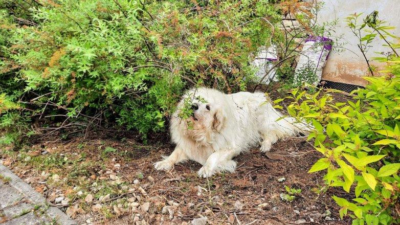 "Pes ""zahradníkem""?"