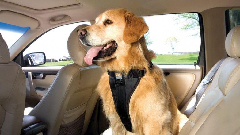 7 rad, jak cestovat se psem na dovolenou