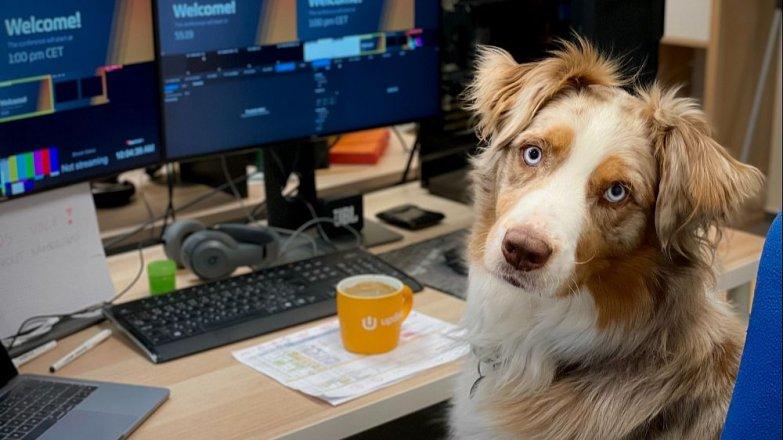 Patří pes do kanceláře?